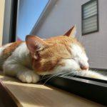 空前の猫ブーム!飼っている方も、飼いたい方も必見の猫も飼い主も快適に暮らせる方法!