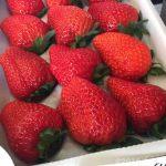 いちご狩り!千葉で美味しい「いちご(苺、イチゴ)」を食べるなら順子のいちご園がオススメ!