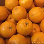 安和ポンカンがとってもジューシーで甘酸っぱい!高知県須崎市へのふるさと納税