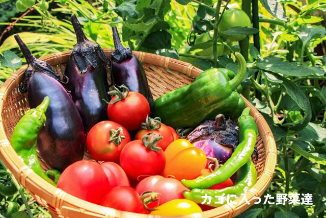カゴに入った多くの野菜