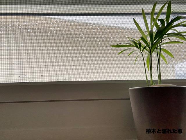 植木と雨の日